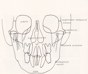 Cephalometric Analysis - Ricketts Frontal Anatomy 1